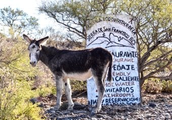 Our welcoming committee, as we drive into the pueblo of San Francisco de la Sierra.